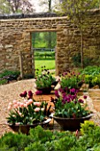 RICKYARD BAN GARDEN  NORTHAMPTONSHIRE: GRAVEL AND HORNTON STONE TERRACE WITH COPPER CONTAINERS PLANTED WITH TULIP APRICOT BEAUTY  TULIP BLACK HERO AND TULIP NEGRITA