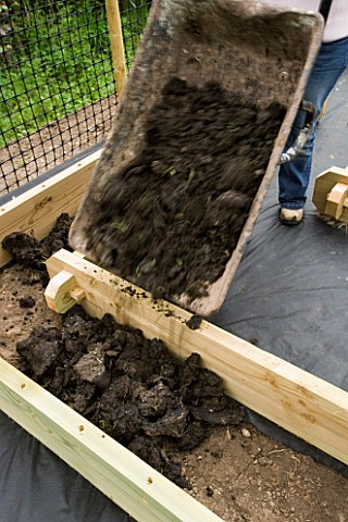 DESIGNER_CLARE_MATTHEWS_CLARE_MATTHEWS_TIPPING_A_WHEELBARROW_OF_COMPOST_INTO_A_WOODEN_BED_IN_THE_POT