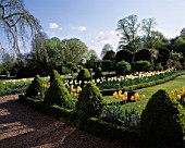 CHENIES MANOR GARDEN  BUCKINGHAMSHIRE:THE SUNDIAL BED IN SPRING WITH BOX TOPIARY ANS TULIP DREAMING GIRL