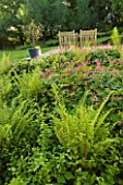 DESIGNER HELEN DOOLEY - ROSE COTTAGE  DORSET: VIEW TO THE LOWER TERRACE WITH GERANIUM BEVANS VARIETY  DRYOPTERIS FELIX FEMINA  MATTEUCIA STRUTHIOPTERIS  LONICERA HALLS PROLIFIC