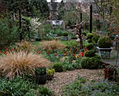 LISETTE PLEASANCE GARDEN  LONDON: VIEW FROM VERANDAH ACROSS GRAVEL GARDEN WITH BOX TOPIARY  STIPA ARUNDINACEA  DECKED TERRACE AND TULIPS