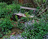LISETTE PLEASANCE GARDEN  LONDON: COTTAGE STYLE PLANTING - WOODEN BENCH WITH EUPHORBIA AND FORGET-ME-NOTS
