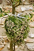 DESIGNER: CLARE MATTHEWS - THYME HEART PROJECT - THME HEART IN FULL FLOWER HANGING ON OLIVE TREE ON PATIO