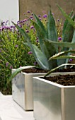 MINIMALIST GARDEN DESIGNED BY WYNNIATT-HUSEY CLARKE: METAL CONTAINER PLANTED WITH AGAVE AMERICANA SURROUNDED BY PLANTING OF VERBENA BONARIENSIS AND MISCANTHUS ZEBRINUS