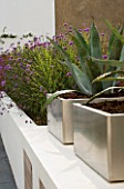 MINIMALIST GARDEN DESIGNED BY WYNNIATT-HUSEY CLARKE: METAL CONTAINERS PLANTED WITH AGAVE AMERICANA SURROUNDED BY PLANTING OF VERBENA BONARIENSIS AND MISCANTHUS ZEBRINUS