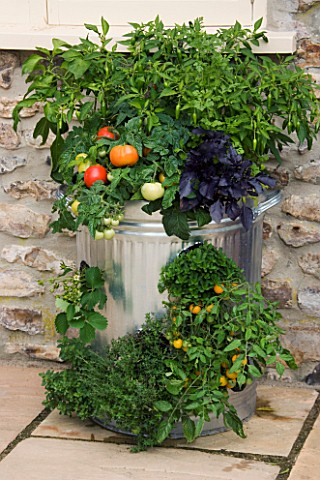 DESIGNER_CLARE_MATTHEWS_VEGETABLE_DUSTBIN__DUSTBIN_PLANTED_WITH_TOMATO_F1_TOTEM__THYMUS_VULGARE_COMP