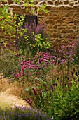 RICKYARD BARN GARDEN  NORTHAMPTONSHIRE: THE GRAVEL GARDEN WITH BETULA NIGRA  STIPA TENUISSIMA  PINK MONARDAS  LITHRUM ROBERT  RUDBECKIA GREEN WIZARD