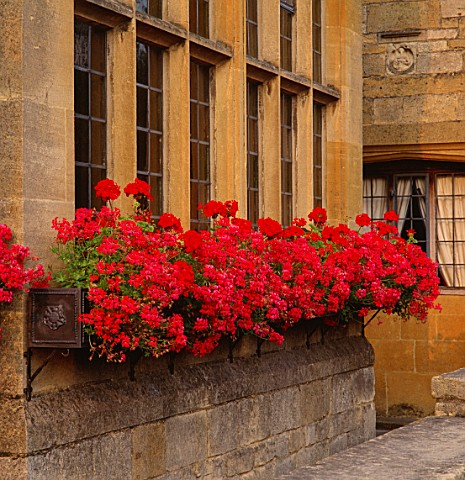 WINDOW_BOXES_OVERFLOWING_WITH_TRAILING_IVY_LEAF_PELARGONIUMS_MINI_CASCADERED_RED_ZONAL_PELARGONIUMS