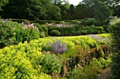 VEDDW HOUSE GARDEN  GWENT  WALES: DESIGNERS ANNE WAREHAM AND CHARLES HAWES - THE CRESCENT BORDER WITH MASSES OF ALCHEMILLA MOLLIS AND  EPILOBIUM ANGUSTIFOLIUM