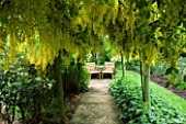 HUNMANBY GRANGE   YORKSHIRE. A PLACE TO SIT. PATH LEADING TO SEATING AREA IN LABURNUM AVENUE/TUNNEL UNDERPLANTED WITH ALCHEMILLA MOLLIS (LADYS MANTLE)