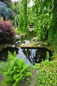 HUNMANBY GRANGE  YORKSHIRE: POND WITH STEPPING STONES AND WEEPING CERCIDIPHYLLUM JAPONICA PENDULA  BERBERIS THUNBERGII ATROPURPUREA  CHRYSOSPLENIUM DAVIDII  SELF-SEEDED FERN