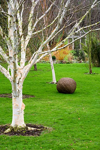 WOODPECKERS__WARWICKSHIRE__WINTER_WOVEN_WILLOW_SCULPTURE_BALL_ON_LAWN_WITH_BETULA_UTILIS_VAR_JACQUEM