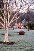 WOODPECKERS  WARWICKSHIRE  WINTER: VIEW TO WOODEN SUMMERHOUSE ACROSS LAWN WITH BETULA UTILIS VAR JACQUEMONTII AND WOVEN WILLOW BALL SCULPTURE