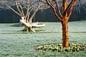 WOODPECKERS  WARWICKSHIRE  WINTER: FROSTED LAWN WITH ACER GRISEUM  GALANTHUS SANDERSII  A WOODEN BENCH