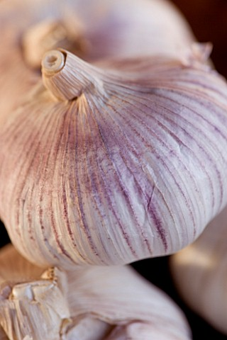 CLOVE_OF_GARLIC_ORGANIC__NATURAL__HEALTHY