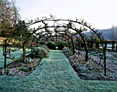 A TUNNEL OF ESPALIERED APPLE TREES IN THE OLD COB-WALLED VEGETABLE GARDEN AT HEALE HOUSE  WILTSHIRE