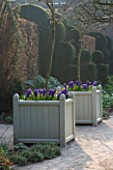 HOLKER HALL  CUMBRIA - DAWN LIGHT ON VERSAILLES CONTAINERS PLANTED WITH BLUE HYACINTHS
