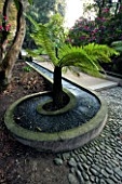 HOLKER HALL  CUMBRIA - WATER RILL CURVING AROUND TREE FERN ON THE LIMESTONE CASCADE