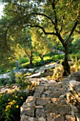 CORFU  GREECE: VILLA IN NORTH EAST CORFU. DESIGN BY ALITHEA JOHNS OF SKOPOS DESIGN AND RAHDY ELWAN. THE GARDEN ON A SLOPE WITH ROCK PATH  HEMEROCALLIS AND OLIVE TREES