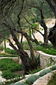 CORFU  GREECE: KERASIA GARDEN IN NORTH EAST CORFU. DESIGN BY ALITHEA JOHNS OF SKOPOS DESIGN AND RAHDY ELWAN. STONE WALL TERRACES AND OLIVE TREES
