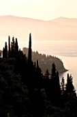 CORFU  GREECE: VIEW OF CYPRESS TREES WITH THE ALBANIAN MOUNTAINS IN THE DISTANCE AT DAWN ON THE NORTH EAST COAST
