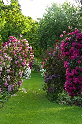 WARDINGTON_MANOR_GARDEN__OXFORDSHIRE_GRASS_PATH_LEADS_TO_AN_URN_PAST_RHODODENDRONS_AND_AZALEAS_IN_SP