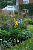 MARINERS GARDEN  BERKSHIRE. DESIGNER FENJA ANDERSON - HERBACEOUS BORDER WITH IRIS JANE PHILLIPS  HOSTAS AND STIPA GIGANTEA WITH THE HOUSE AND CONSERVATORY BEHIND