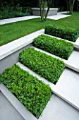 CONTEMPORARY TOWN/CITY/URBAN GARDEN DESIGNED BY CHARLOTTE SANDERSON: BOX RECTANGLES SET INTO LIMESTONE STEPS