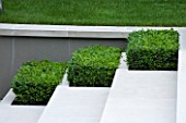CONTEMPORARY GARDEN DESIGNED BY CHARLOTTE SANDERSON: BOX RECTANGLES SET INTO LIMESTONE STEPS
