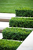 CONTEMPORARY TOWN/CITY/URBAN GARDEN DESIGNED BY CHARLOTTE SANDERSON: LIMSTONE STEPS WITH BOX RECTANGLES