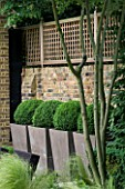 URBAN CONTEMPORARY MODERN MINIMALIST GARDEN DESIGNED BY CHARLOTTE SANDERSON: CONTAINERS PLANTED WITH BOX BALLS  BRICK WALL AND WOODEN TRELLIS BESIDE PATIO