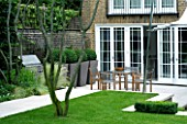 URBAN CONTEMPORARY MODERN MINIMALIST GARDEN DESIGNED BY CHARLOTTE SANDERSON: VIEW ACROSS LAWN WITH PATIO WITH WOODEN TABLE AND CHAIRS AND PAVING  CONTAINERS WITH BOX BALLS