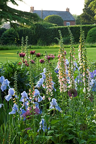 THE_OLD_RECTORY__HASELBECH__NORTHAMPTONSHIRE_HERBACEOUS_BORDER_WITH_IRIS_JANE_PHILLIPS__DIGITALIS_SU