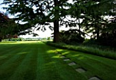 THE OLD RECTORY  HASELBECH  NORTHAMPTONSHIRE - LAWN WITH CEDAR OF LEBANON