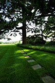 THE OLD RECTORY  HASELBECH  NORTHAMPTONSHIRE - LAWN WITH STEPPING STONES AND CEDAR OF LEBANON