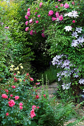 AMELIA_HEATH_GARDEN__1__CROSS_VILLAS__SHROPSHIRE_PATH_BESIDE_THE_BACK_OF_THE_HOUSE_WITH_CLEMATIS_NEL