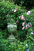 AMELIA HEATH GARDEN  1  CROSS VILLAS  SHROPSHIRE: SACRET GARDEN WITH STONE URN  FUCHSIA  ROSE NATALIE NYPELS AND BOWLES GOLDEN GRASS