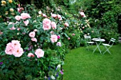 AMELIA HEATH GARDEN  1  CROSS VILLAS  SHROPSHIRE: THE SECRET GARDEN. A PLACE TO SIT - WOODEN TABLE AND CHAIRS ON LAWN SURROUNDED BY ROSA NATALIE NYPELS