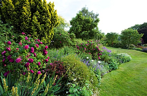 MARINERS_GARDEN__BERKSHIRE_DESIGNER_FENJA_ANDERSON__LAWN_AND_HERBACEOUS_BORDER_WITH_ROSE_CHARLES_DE_