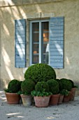 DESIGNER DOMINIQUE LAFOURCADE  PROVENCE  FRANCE. GROUP OF TERRACOTTA CONTAINERS PLANTED WITH BOX BALLS BENEATH A SHUTTERED WINDOW. PROVENCAL  TERRACE