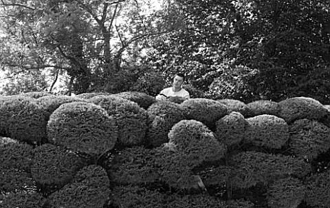 PROVENCE__FRANCE_MARCO_NUCERA_TRIMMING_A_HUGE_HEDGE_BLACK_AND_WHITE_IMAGE