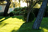 DESIGNER ALAIN DAVID IDOUX - MAS BENOIT  PROVENCE  FRANCE. CLIPPED BOX TOPIARY IN EARLY MORNING