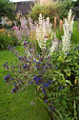 THE OLD RECTORY  MIXBURY  NORTHANTS. DESIGNER: ANGEL COLLINS: BORDERS BESIDE A BARN WITH ANCHUSA LODDON ROYALIST AND WHITE SALVIA