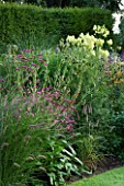 PETTIFERS  OXFORDSHIRE: BORDER WITH SANGUISORBA  ERYNGIUM AGAVIFOLIUM  THALICTRUM LUCIDUM AND PENNISETUM KARLEY ROSE