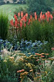 PETTIFERS  OXFORDSHIRE: BORDER WITH KNIPHOFIA TIMOTHY  ACHILLEA TERRACOTTA  STIPA TENUISSIMA AND ERYNGIUM PICOS BLUE