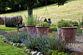CLARE MATTHEWS GARDEN  DEVON. GRAVEL AREA WITH HERBS IN LARGE TERRACOTTA POTS AND PERENNIAL BORDER. IN THE BACKGROUND  THE CHILDREN RELAX ON SWING CHAIRS. DESIGNER CLARE MATTHEWS