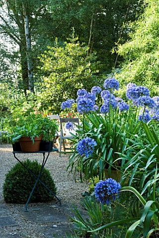 DAVID_HARBER_SUNDIALS_COTTAGE_GRAVEL_GARDEN_WITH_AGAPANTHUS_AND_SMALL_METAL_TABLE_WITH_TERRACOTTA_PO