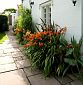 DARREN CLEMENTS GARDEN  STAFFORDSHIRE: BORDER BESIDE THE HOUSE WITH CROCOSMIA WARBURTON RED  PHORMIUM PURPUREA AND HEMEROCALLIS FULVA