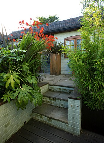 DARREN_CLEMENTS_GARDEN__STAFFORDSHIRE_STEPS__WITH_BAMBOO__FATSIA_JAPONICA_AND_CROCOSMIA_LUCIFER