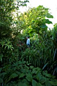DARREN CLEMENTS GARDEN  STAFFORDSHIRE: DARREN IN AMONGST THE TROPICAL FOLIAGE OF PAULOWNIA TOMENTOSA  MISCANTHUS SINENSIS AND PHYLOSTACHYS NIGRA